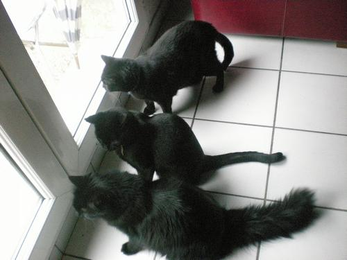 Amy, Mia , Noisette