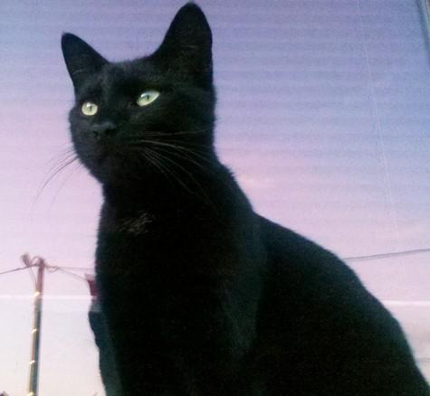 Félix chatsnoirs