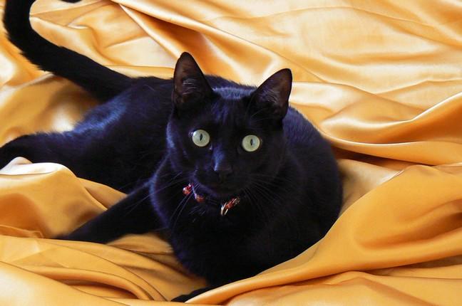 Fripouille 168ème chat noir membre de chatsnoirs.com