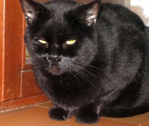 Fripouille 316e membre du Club Chats Noirs