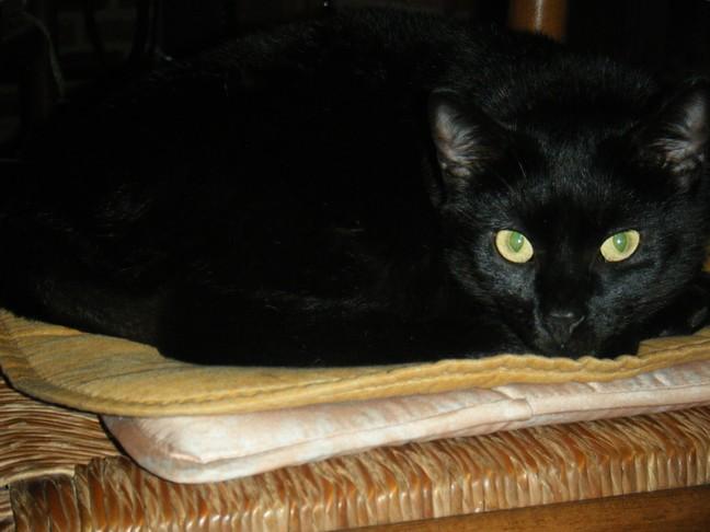 Gaillette, 348e membre du Club Chats Noirs