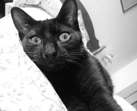 Gary 200ème chat noir sur chatsnoirs.com