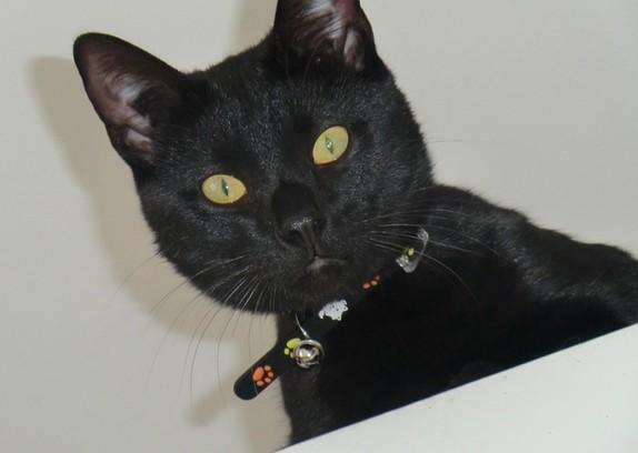 Guévara 181 ème chat noir sur chatsnoirs.com