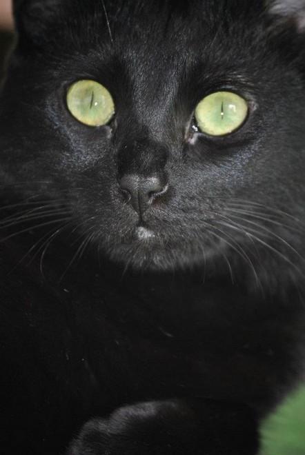 Leenka, 349e membre du Club Chats Noirs