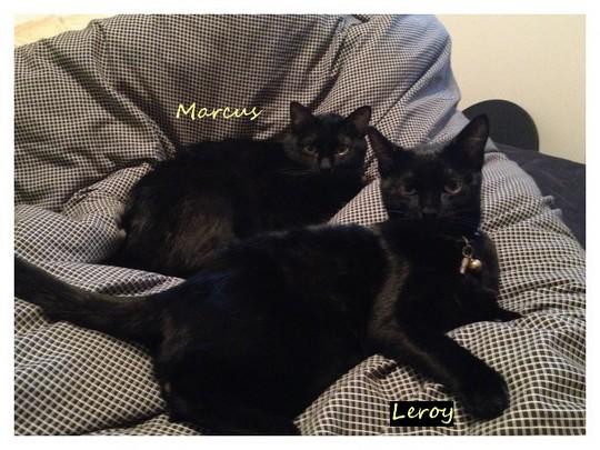 Leroy, 299e et Marcus 195e membre du Club Chats Noirs