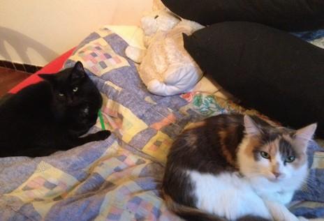 Lucky -278ème membre du club chats noirs