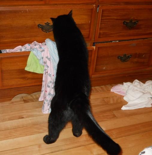Lucky chat noir membre de chatsnoirs.com
