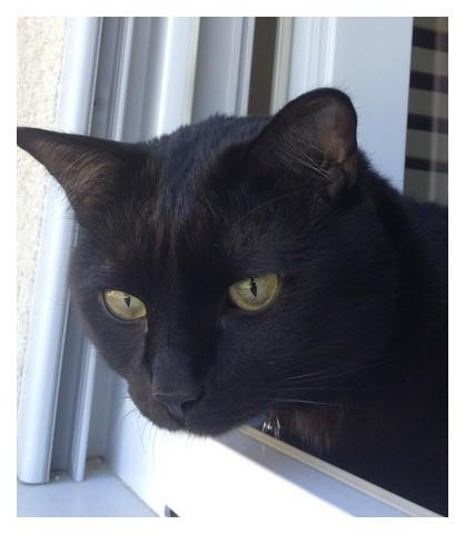 Marcus 195 ème chat noir sur chatsnoirs.com
