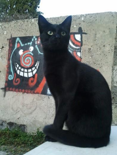 Migou chat noir membre de chatsnoirs.com
