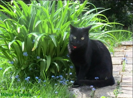 Mimie, 329e membre du Club Chats Noirs