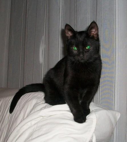 Minuit 190 ème chat noir sur chatsnoirs.com