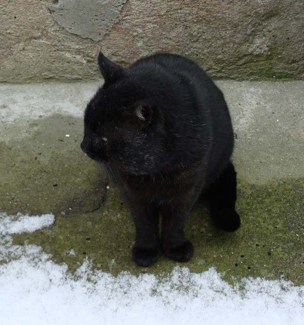 Noiraud chat noir