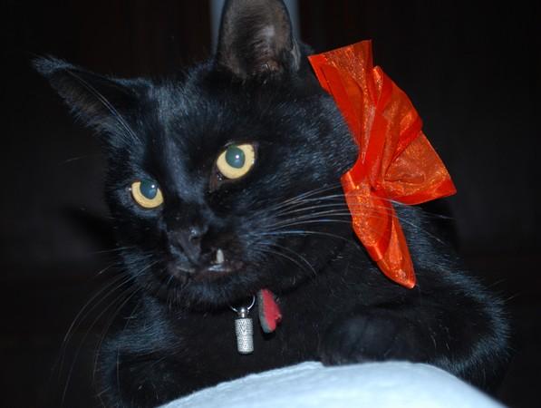 PACO 173 e chat noir membre de chatsnoirs.com