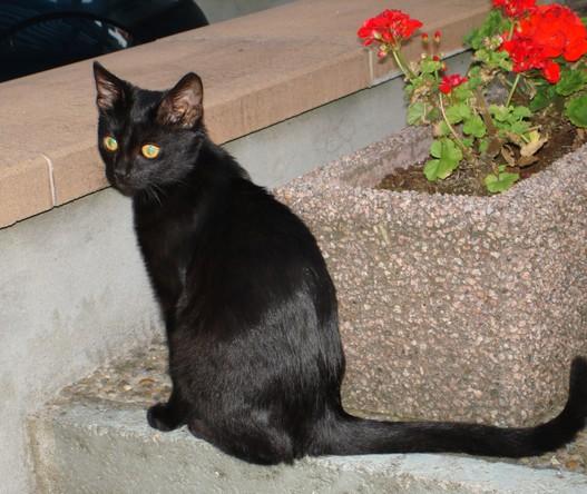 Prada 188 ème chat noir sur chatsnoirs.com