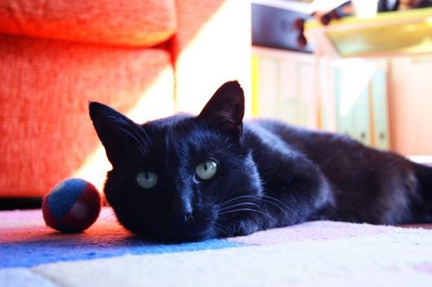 René 171ème chat noir membre de chatsnoirs.com