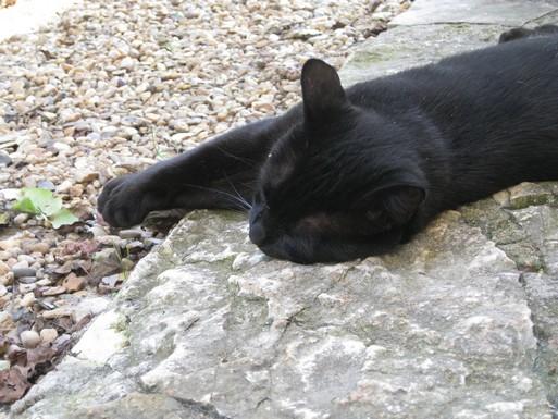 Salem 191 ème chat noir sur chatsnoirs.com