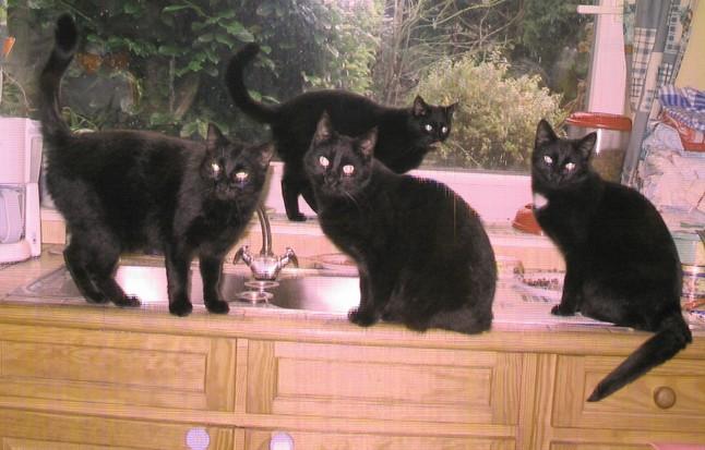 Filles de Cassis 183ème chat noir sur chatsnoirs.com