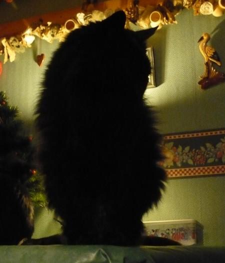 Bonnie Décembre 2009