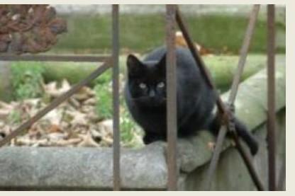 Chat noir Père Lachaise