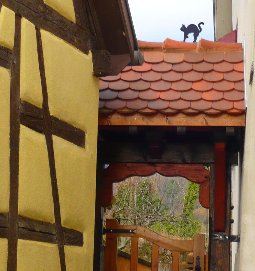 chat noir Ribeauvillé Alsace