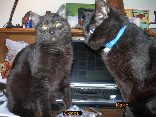 Koko & Gagou