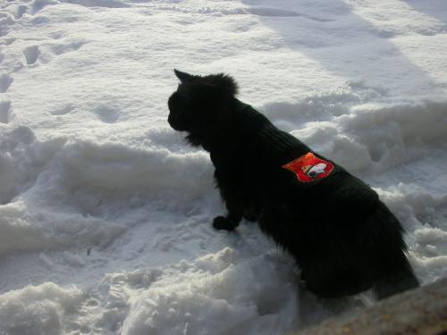 Bonnie dans la neige