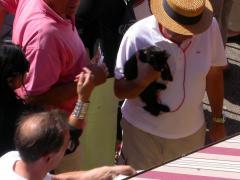 Jules chat noir en Alsace
