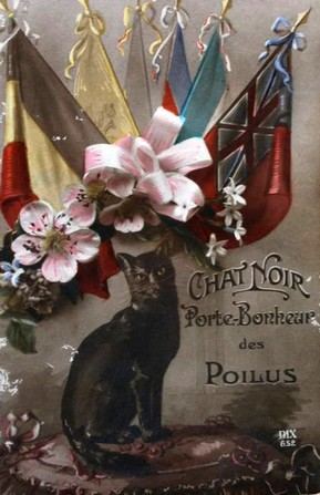 Carte postale chat noir 14_18