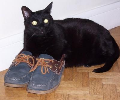 Mimil- cimetière des chats noirs