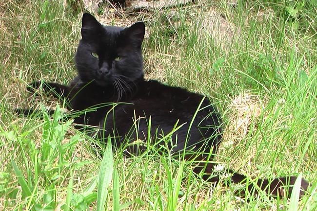 Balthazar- cimetière des chats noirs