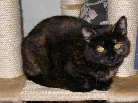 Bethesda - cimetière des chats noirs