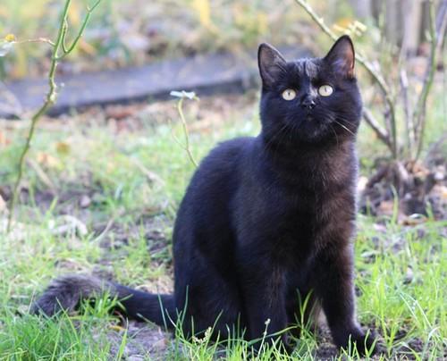 Blackie - cimetière des chats noirs