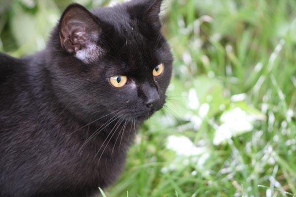 Blacky - cimetière des chats noirs