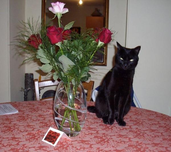 César - Cimetière chats noirs