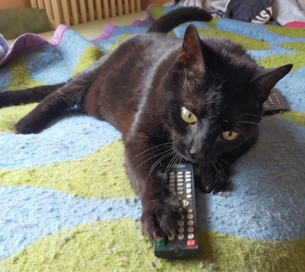 Fridu - Cimetière des chats noirs