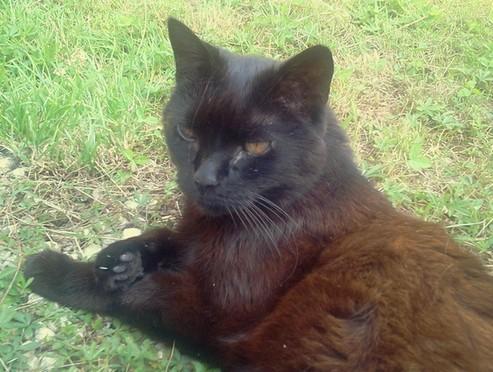 Julie - cimetiere des chats noirs