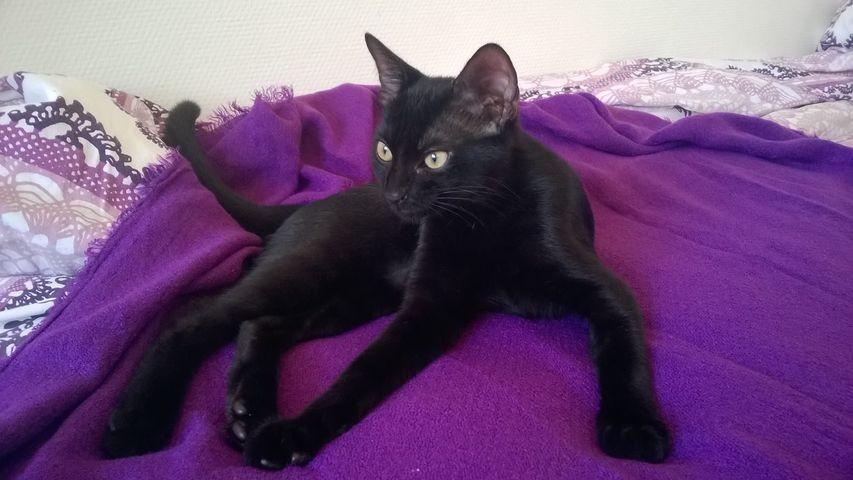 Maoris - Cimetière des chats noirs