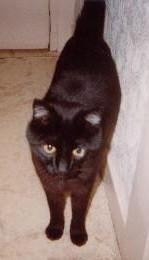 Marlon -Cimetière des chats noirs