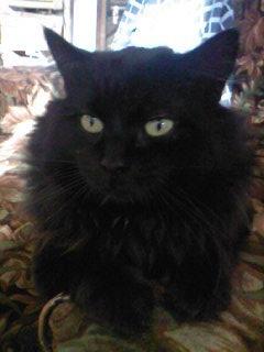 Miii - cimetière des chats noirs