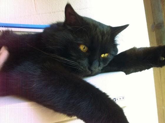 Cimetière des chats noirs- Nespresso