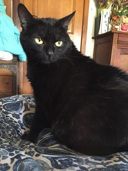 Salomé - Cimetière des chats noirs