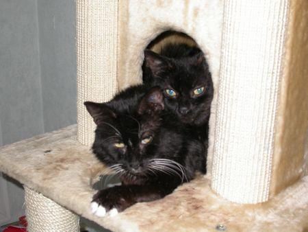 Poulbot et Sammy - cimetière des chats noirs