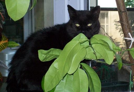 Sammy - cimetière des chats noirs