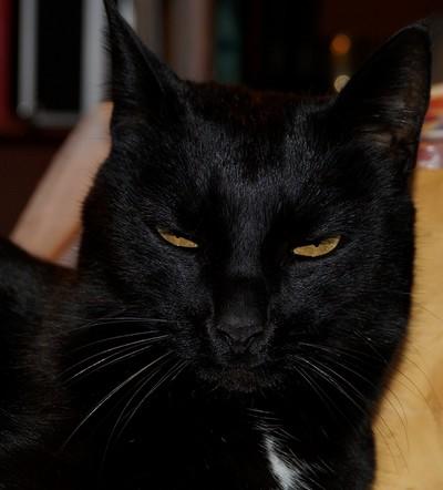 Sangha - cimetière des chats noirs