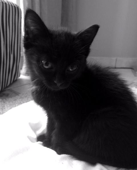 Zélie - cimetière des chats noirs
