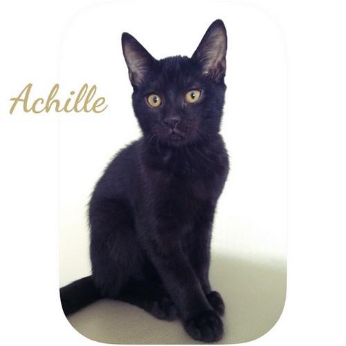 Achille chats noirs