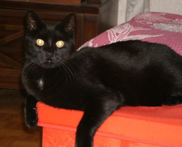 Alex 634e membre cluc chats noirs