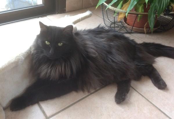 Aliki chat noir 1235