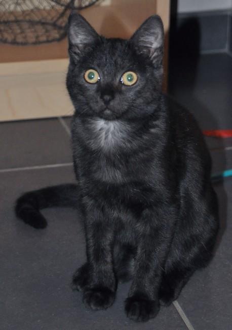 Artémis - chat noir 1190