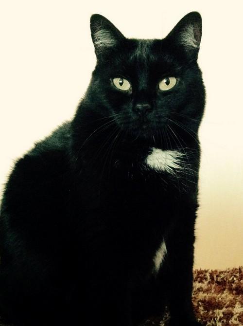 Baguerra 642e membre club chats noirs